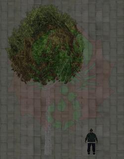 Baum 3 und Ryder