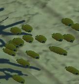Gelbe Fische